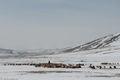 Bayan-Ölgii, Goat, Horse, Kazakh, Mongolia, Sheep