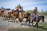 Camel,China,Horse,Kazakh,Pack Animal,Xinjiang