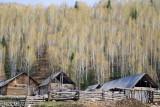 Cabin,China,Xinjiang