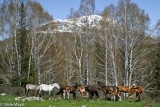 China,Wild Horse,Xinjiang