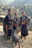 Burma,Eng,Pig,Shan State