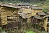 China,Drying,Drying Rack,Guizhou,Paddy