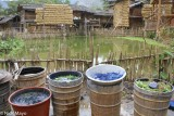 China,Drying,Drying Rack,Guizhou,Indigo,Paddy
