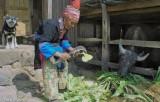 China,Dog,Fodder,Hat,Water Buffalo,Yao,Yunnan