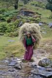 Fodder,India,Strap,Uttarakhand
