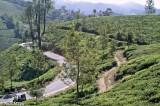India,Kerala,Tea Field