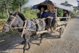 Cart,China,Hat,Horse,Sichuan,Yi