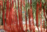 China,Prayer Flag,Sichuan