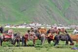 China,Festival,Horse,Sichuan