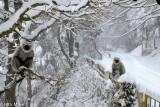 Himachal Pradesh,India,Monkey