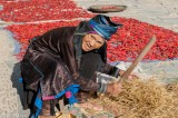 China,Dong,Guizhou,Hat,Paddy,Threshing