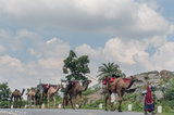 Leading The Camels To The Next Camp