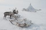 Reindeer,Russia,Sledge,Tent,Yamalo-Nenets