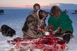 Dog,Malitsa,Meat,Nenets,Russia,Yagushka,Yamalo-Nenets