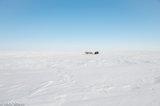 Nenets,Russia,Sledge,Yamalo-Nenets