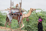 Camel,Earring,Gujarat,Head Scarf,India,Pack Animal,Rabari