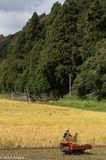 Farmer & Golden Field