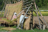 Two Farmers Hanging Rice To Dry