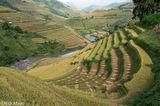 Paddy,Vietnam,Yen Bai