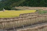 Drying Rack,Harvesting,Japan,Kyushu,Paddy