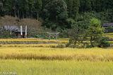 Japan,Kyushu,Paddy,Torii Gate