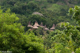 Indonesia, Roof, Sumba, Thatch, Village