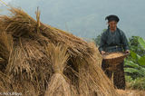Ha Giang, Paddy, Vietnam, Winnowing, Zhuang