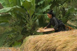 Ha Giang, Head Scarf, La Chi, Paddy, Vietnam, Winnowing