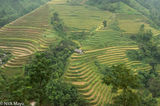 Ha Giang, Hut, Paddy, Vietnam