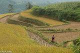 Ha Giang, Miao, Paddy, Vietnam