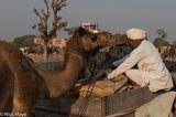 Camel, Festival, India, Rajasthan, Turban