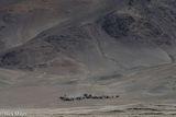 Bayan-Ölgii, Camel, Herding, Horse, Kazakh, Mongolia, Pack Animal, Yak