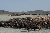 Bayan-Ölgii, Camel, Goat, Herding, Horse, Kazakh, Mongolia, Pack Animal, Sheep