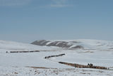 Bayan-Ölgii, Camel, Goat, Herding, Horse, Kazakh, Mongolia, Pack Animal, Sheep, Yak