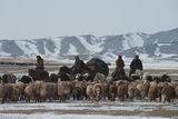 Bayan-Ölgii, Camel, Goat, Horse, Kazakh, Mongolia, Pack Animal, Sheep, Yak