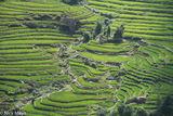 Ha Giang, Paddy, Vietnam