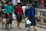 Goat, Ha Giang, Market, Vietnam, Zhuang