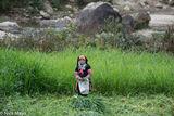 Cutting, Grass, Lai Chau, Vietnam, Yao