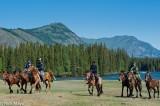 China,Horse,Tuva,Xinjiang