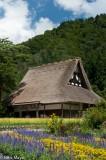 Chubu,Japan,Residence,Roof,Thatch