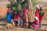 Chhattisgarh,Dog,Gond,India,Market