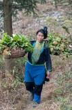 China,Guizhou,Hair,Miao,Shoulder Pole,Vegetable