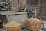 China,Guizhou,Mallet,Paddy,Thresher