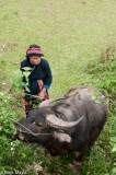 Ha Giang,Vietnam,Water Buffalo,Yao