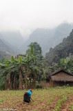 Ha Giang,Miao,Residence,Vietnam,Weeding