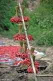 Chillies Hung To Dry From Pole