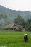 Dai,Ha Giang,Paddy,Residence,Thatch,Vietnam