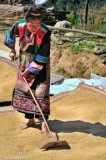 Apron,China,Lisu,Paddy,Raking,Turban,Yunnan