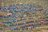 Bullfight,China,Dong,Guizhou,Miao