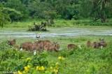 Deer,Southern Province,Sri Lanka